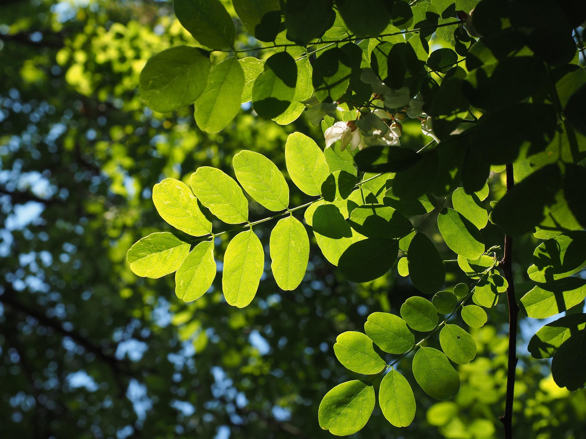 初夏の緑の葉