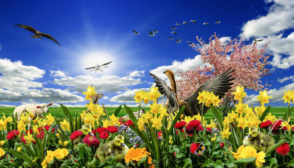 お花と青い空